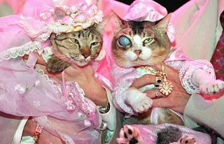 Cat wedding Thailand