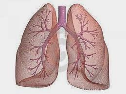 poumon de fer