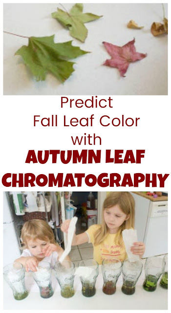 How to Use Leaf Chromatography to Predict Fall Leaf Color