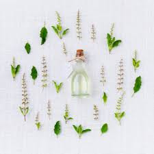 Tulsi herbs protects from seasonal effects,  benefits, full details