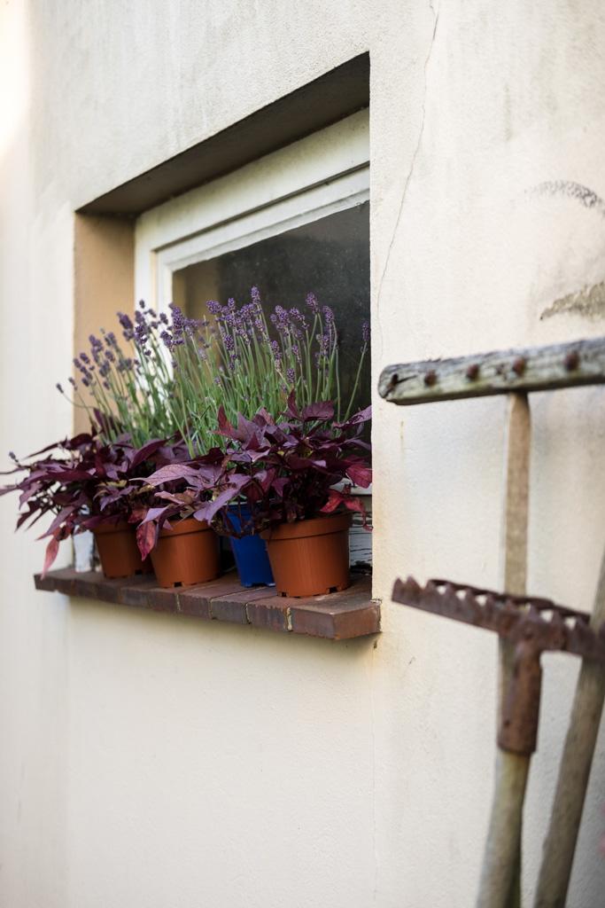 www.fim.works | Lifestyle-Blog | Lavendel, Kartoffelblume, alte Gartengeräte, Shabby Deko