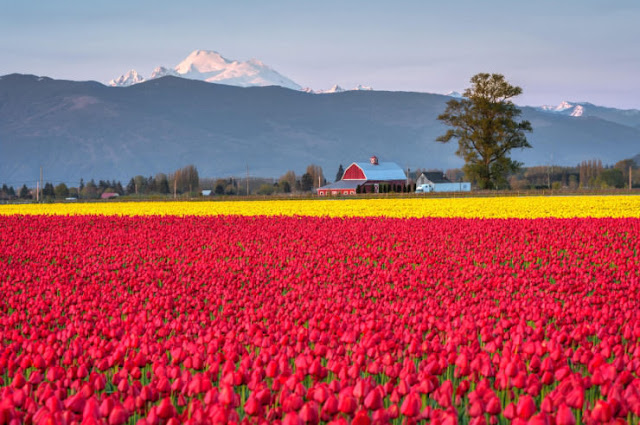 Skagit Valley, Washington, Amerika Serikat