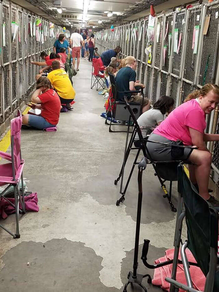 People Skipped The Fireworks On July 4th To Comfort Frightened Shelter Dogs