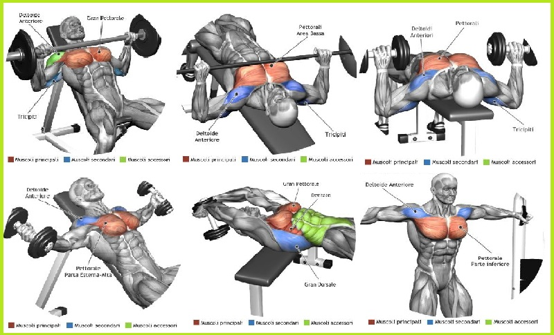 The Top 5 Chest Muscle Exercises Bodydulding