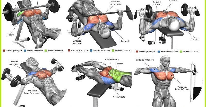 The Top 5 Chest Muscle Exercises - all-bodybuilding.com