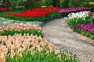 Plantas De Jardin 2017 - Flores-bonitas-para-jardin
