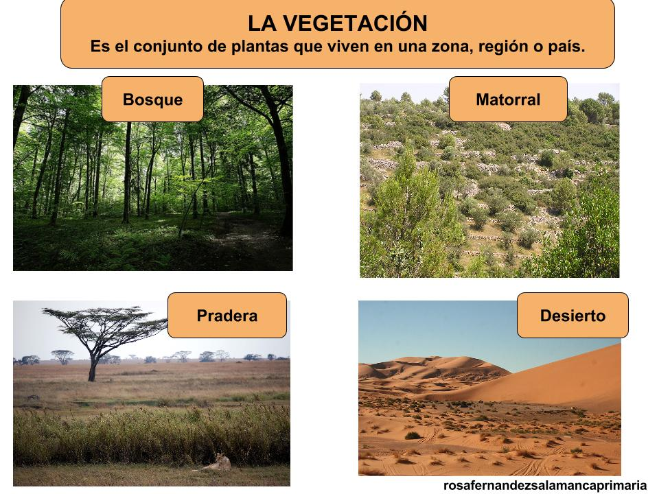 Maestra de primaria los animales y las plantas en la - Clases de suelo ...