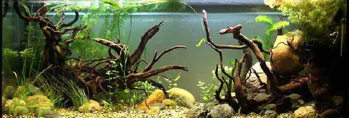 How To Aquascape Freshwater Aquarium Design Ideas