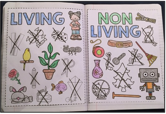 Science Interactive Notebooks Living on Needs And Characteristics Of Living Things 1