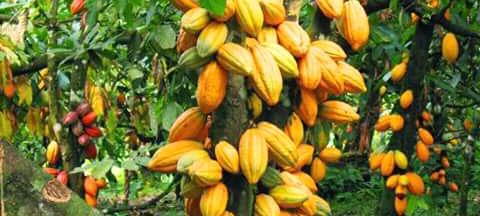 http://www.munawirsuprayogi.com/2018/02/siapa-yang-menanam-mereka-yang-menuai.html