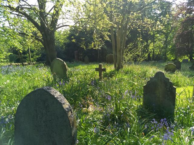 bluebell churchyard