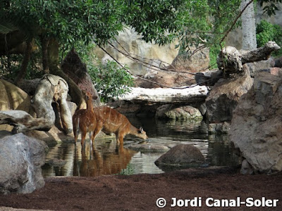 Detalle de hábitat en Bioparc Valencia