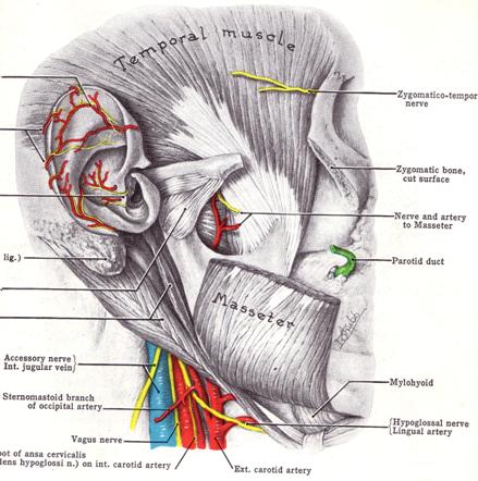 inflamația periostului articulației degetului