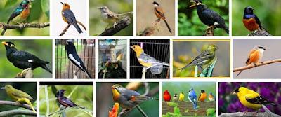 Khasiat/Manpaat Dan Harga Terbaru Vitamin Burung Orange Saat Ini Terlengkap