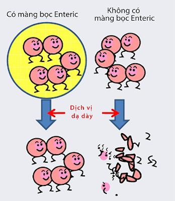 Công nghệ Màng bọc Enteric của Lactoferrin GX