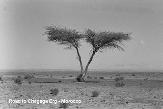Chegaga erg desert Morocco