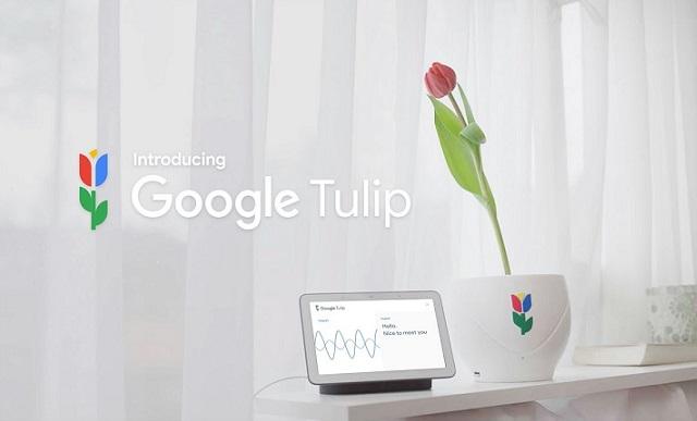 Google Menciptakan Alat Yang Bisa Berkomunikasi Dengan Bunga Tulip