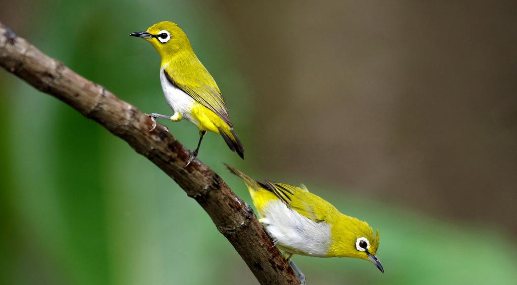 Download Suara Burung Pleci  924809d3f1