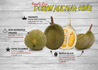 Kenali Ciri Durian Musang King