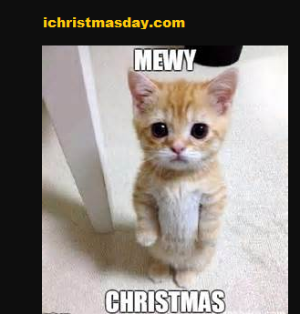58 best Funny Christmas Memes images | best Merry ...
