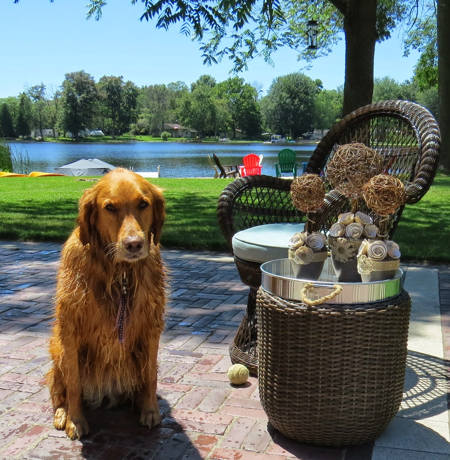 Cricket,, Golden Retreiver, Pier 1 Imports Wicker Swivel Chair. Wicker Planter, Tin serving Tray, Wicker and Tin Serving Tray