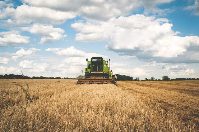 agriculture agricole amour pré ferme