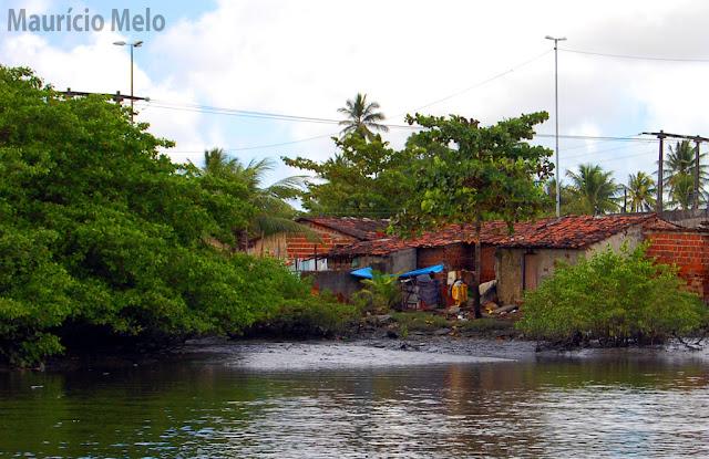 Vida de caranguejo é no mangue, o mangue é morada de caranguejo (crédito: Maurício Melo)