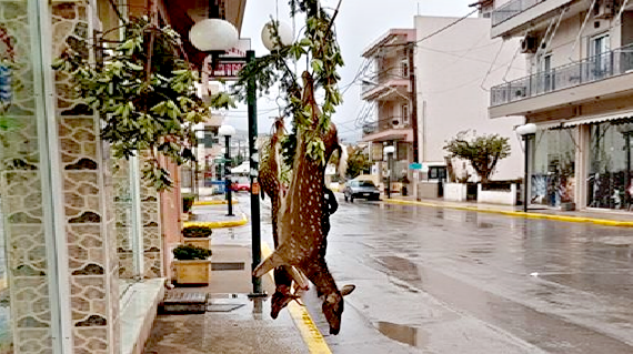 Στην Εύβοια έσφαξαν και κρέμασαν ελάφια στο πεζοδρόμιο
