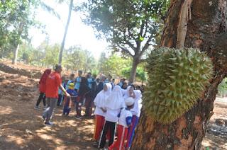 omonganem festiva durian margorejo