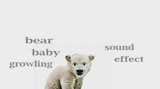 learn bear sounds