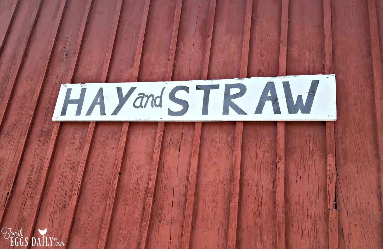 Straw vs  Shavings - My Choice for Coop Litter | Fresh Eggs