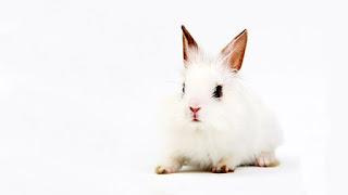 http://www.veganismo.org.br/p/testes-em-animais-sabia-que-quase-todos.html