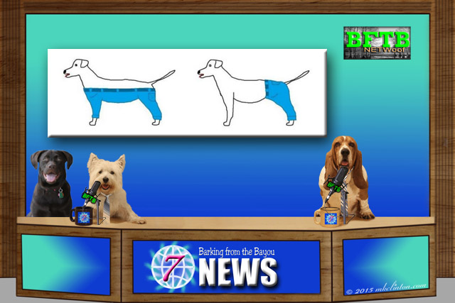 BFTB NETWoof News with drawing of two ways a dog can wear pants