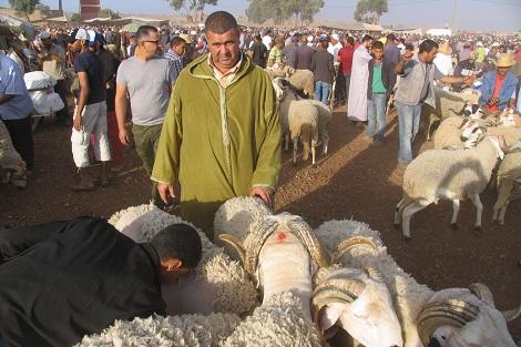"""خروف """"الصردي"""" .. ملِك الأكباش يتأنق في أسواق العيد بسطات"""