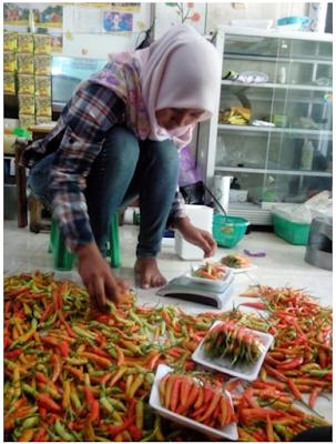 KEGIATAN MAHASISWA KKN di PT. INDMIRA (Citra Tani Nusantara)
