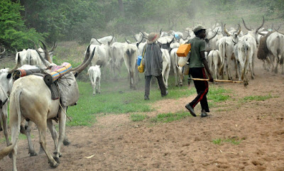X-Raying Military Operation Against Cattle Rustling In Zamfara 1