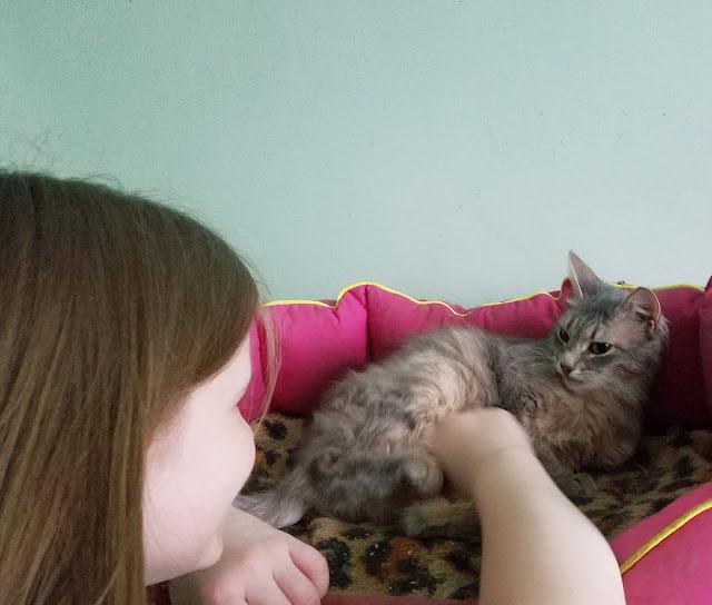 Самарский детский эколого-биологический центр: привет, кошка!