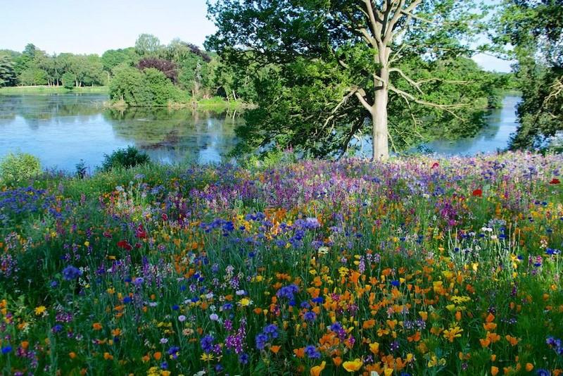 """Pictorial Meadows"" praderas pictoricas flores multicolor valor ornamental, profesores Nigel Dunnett,James Hitchmough"