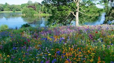 Praderas de flores de plantas anuales y vivaces en Trentham Gardens