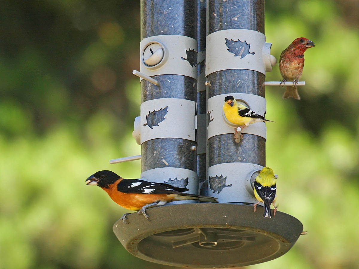 Attract birds to your backyard: Part 4: Bird foods ...