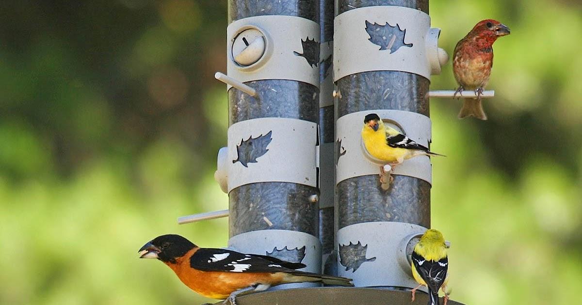 Attract birds to your backyard: Part 4: Bird foods ...