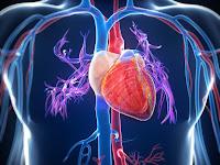 Ini Perbedaan Sistem Peredaran Darah Terbuka dan Tertutup
