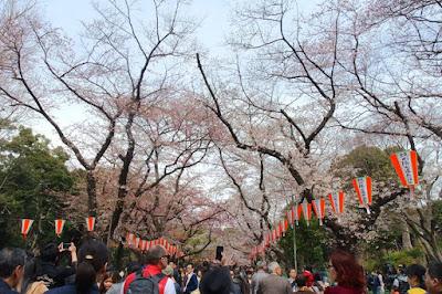 10D9N Spring Japan Trip: Sakura Season at Ueno Park, Tokyo