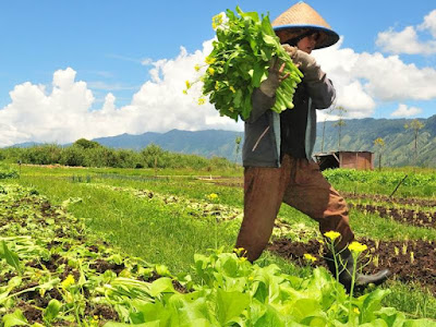 contoh peluang usaha pertanian 2016