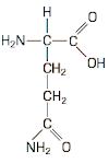 O que é Glutamina? Função, Benefícios e Alimentos Ricos nesse Aminoácido