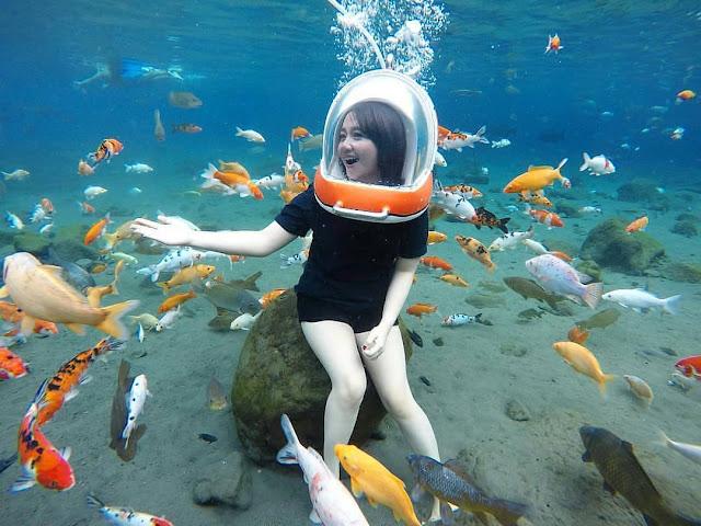 memberi Makan ikan dari dasar Kolam Umbul Ponggok Klaten