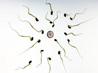 14 Cara Meningkatkan Jumlah Sperma Secara Alami