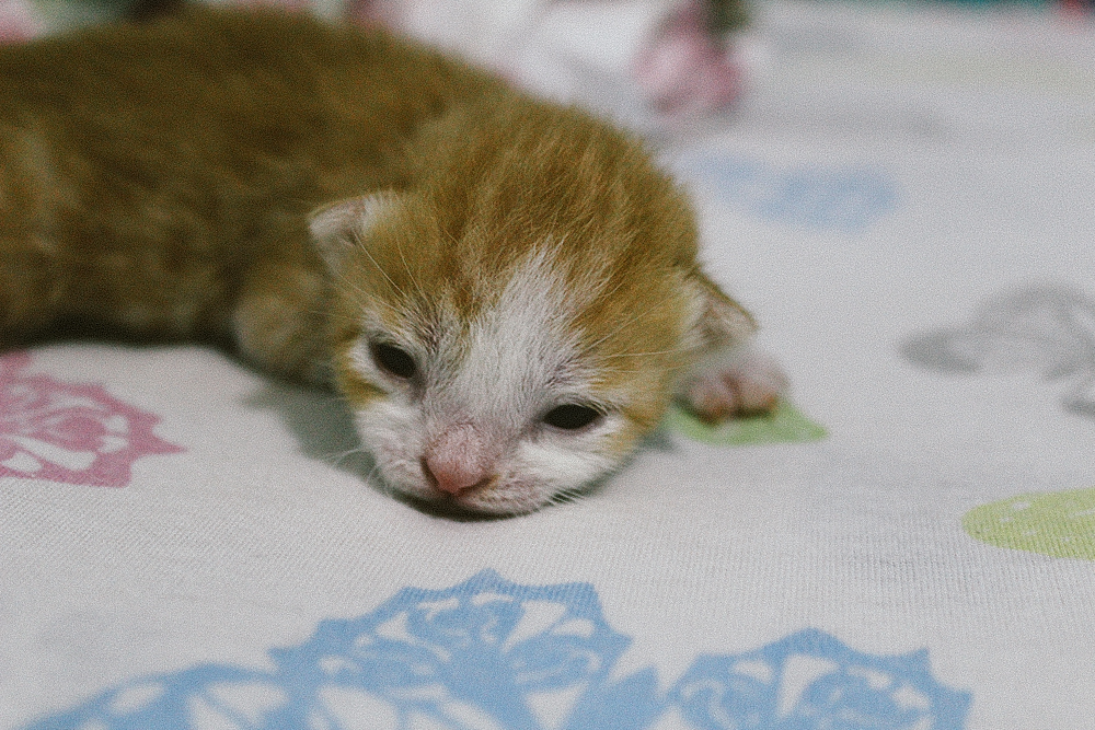 Kitty in his first open eye days.