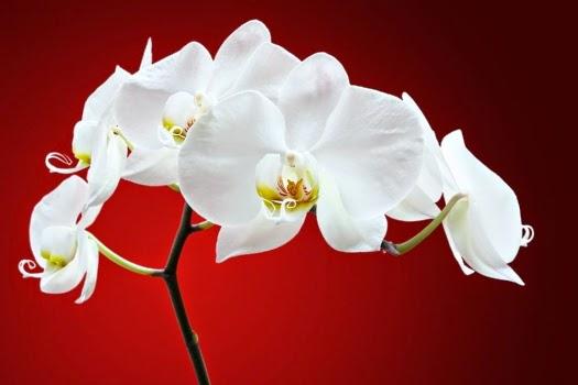 Imagenes de Amor, Flores Blancas, parte 5