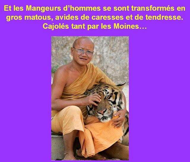 Les tigres 14-02-2011003